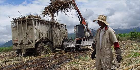 Prevén déficit en el mercado mundial del azúcar