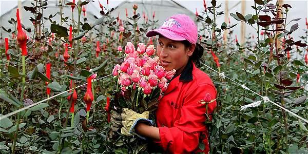 Resultado de imagen para imagenes flores para exportar colombianas