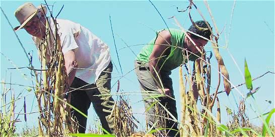 Cajas de compensación quieren llevar servicios a trabajadores rurales