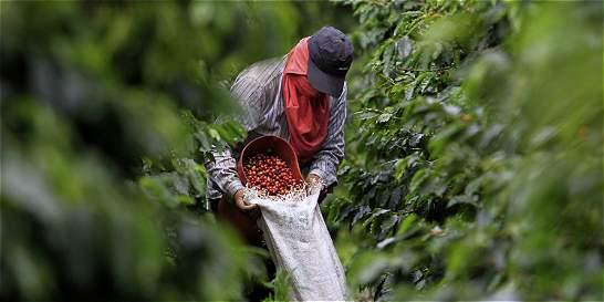 Comités departamentales piden revivir subsidio al café