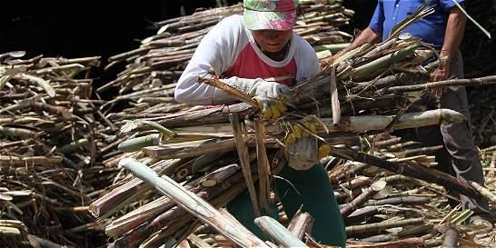 Gobierno no desmontará las ayudas al gremio azucarero
