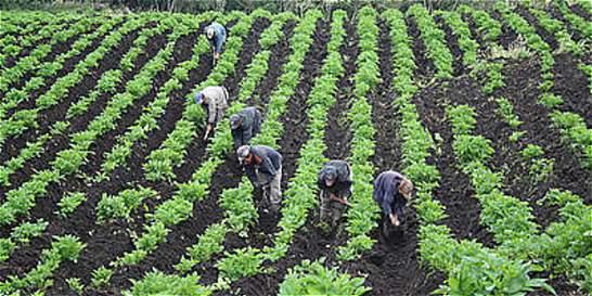 MinAgricultura le apuesta a las tierras tolimenses