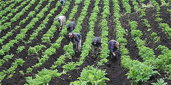 Un millón de nuevas hectáreas, de 7.131.500 hectáreas sembradas a 8.131.500.