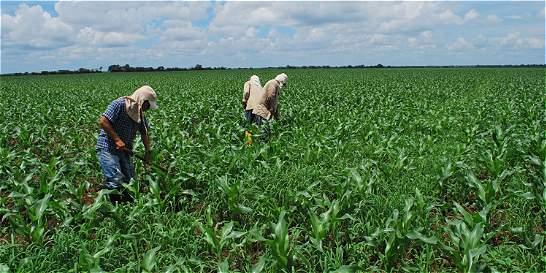 Con siete decretos harán revolcón en el sector agropecuario