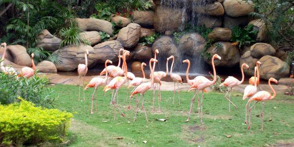 En la terminal de cruceros de la Sociedad Portuaria de Cartagena se abrió el zoológico, que a la entrada presenta este paisaje.