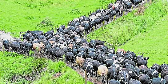 Fedegán considera atropello medida del Gobierno sobre el FNG