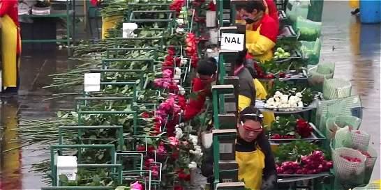 Floricultores colombianos a la conquista de Canadá y España