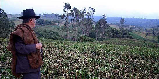 Sector agrario tuvo crecimiento al final del año y se ubicó en 4,8 %