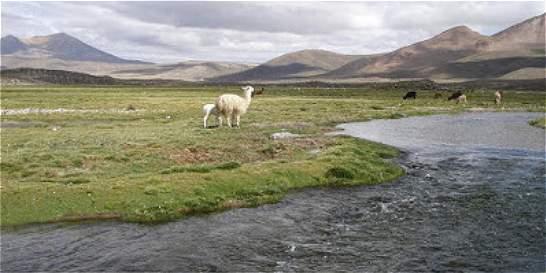 EPM refuta a Evo Morales por uso de agua del río Silala en Chile