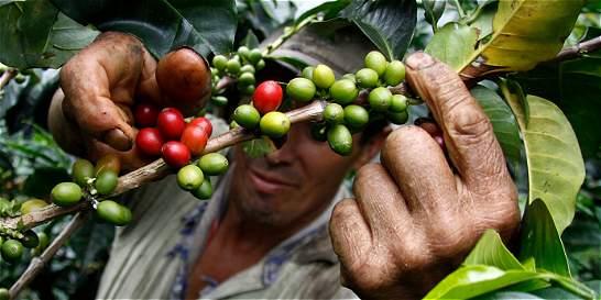 'Pods' de café, tinas y aguacates, con demanda en el extranjero
