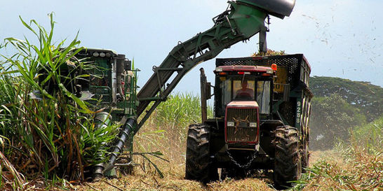 Por lluvias, producción de azúcar crecerá en 14 %