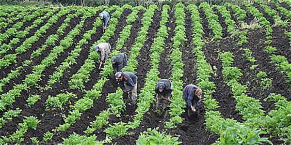 El 65,8 % de la tierra apta para sembrar en Colombia no se aprovecha