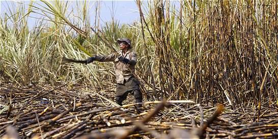 Gremios y sindicatos del Valle piden no bajar arancel del azúcar
