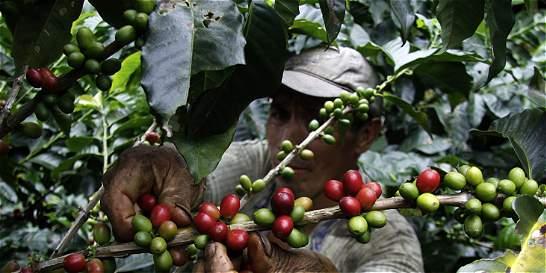 Antioquia necesita 44.000 recolectores de café