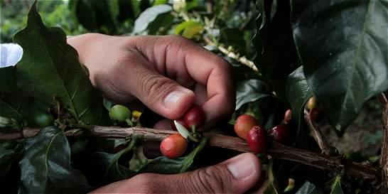 Federación de Cafeteros mejora precio de compra de café
