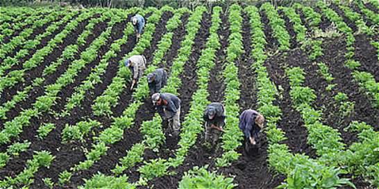 El campo lidera la generación de trabajo en el país
