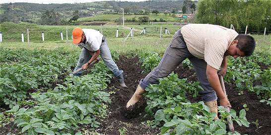Créditos para el agro llegaron a 8,5 billones de pesos en 2015