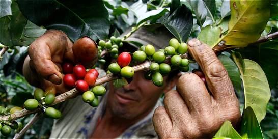 Colombia tendrá la cosecha de café más valiosa de su historia
