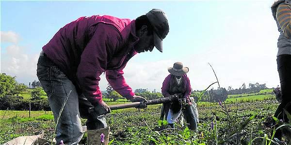 Del porcentaje de área rural en Colombia, el 38,6 por ciento tiene uso agropecuario, lo que equivale a 43,0 millones de hectáreas.