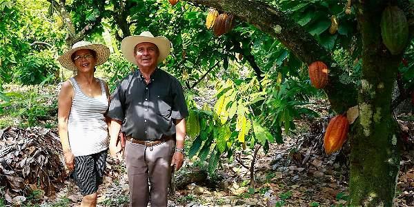 Se ha impactado la economía de 26 familias que cultivan cacao y de otras 29 que cultivan caña.