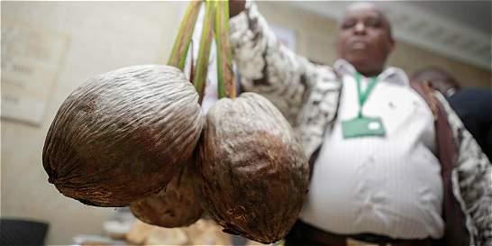 El coco, la fruta tropical que está llegando a más hogares colombianos