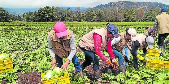 Relevo generacional: la clave del sector agrícola