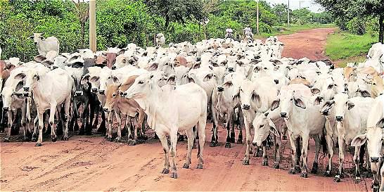 Subastas de ganado, a pagar $ 3.000 millones por haberse cartelizado