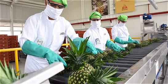 La empresa colombiana que vende más piña al mundo