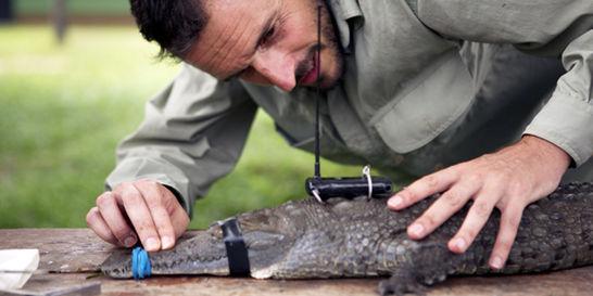 Señal Colombia presenta la serie documental 'Héroes al rescate animal'