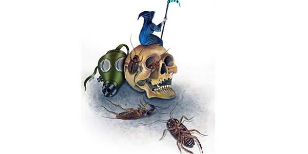 Blatta, una especie del oscuro mundo de los insectos rastreros
