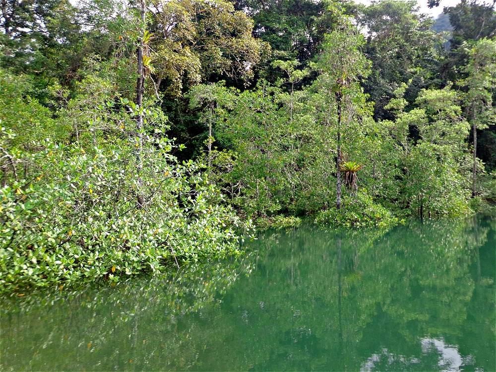 Así se ve el manglar Estero Grande, en la ensenada de Utría, cuando la marea está alta.