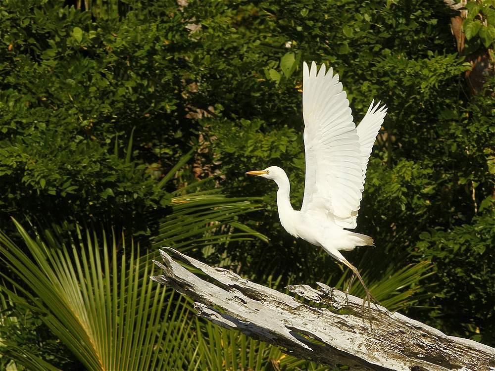 El Pacífico colombiano es un santuario para los amantes de las aves.