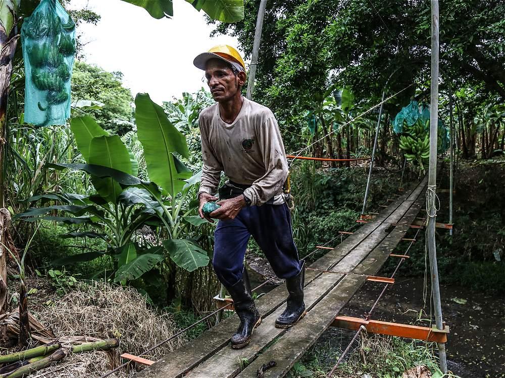 Apartadó (Antioquia) es conocida como la capital bananera de Colombia. Las extensas plantaciones de este fruto generan 25.000 empleos directos en Urabá.