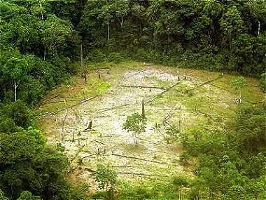 La economía latinoamericana puede crecer sin devastar los bosques