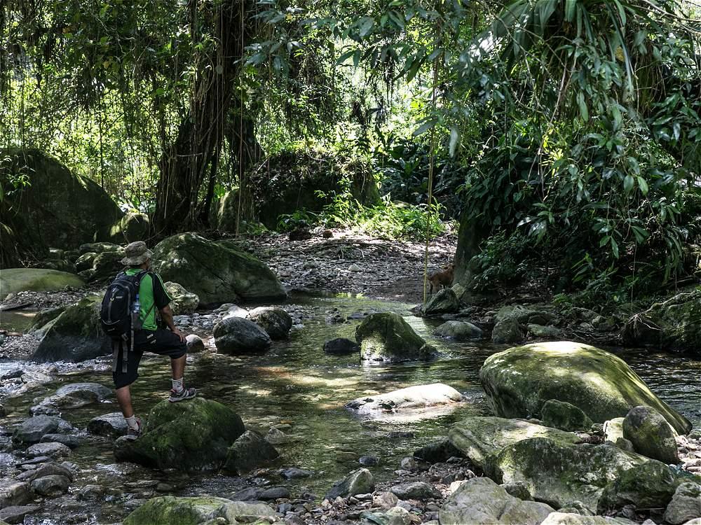 El recorrido hacia las terrazas se hace a través de bosque tropical húmedo.