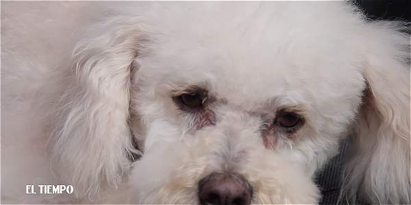 Fernando, el perro que esperó a su dueño en la clínica sin saber que había muerto