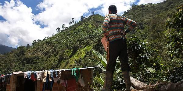 Tras lograr salir de las filas de las Farc, hoy desarrolla un proyecto productivo de cultivo y preparación de café.
