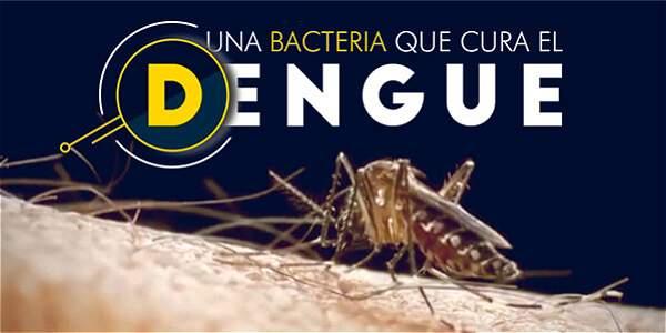 Una bacteria que cura el dengue