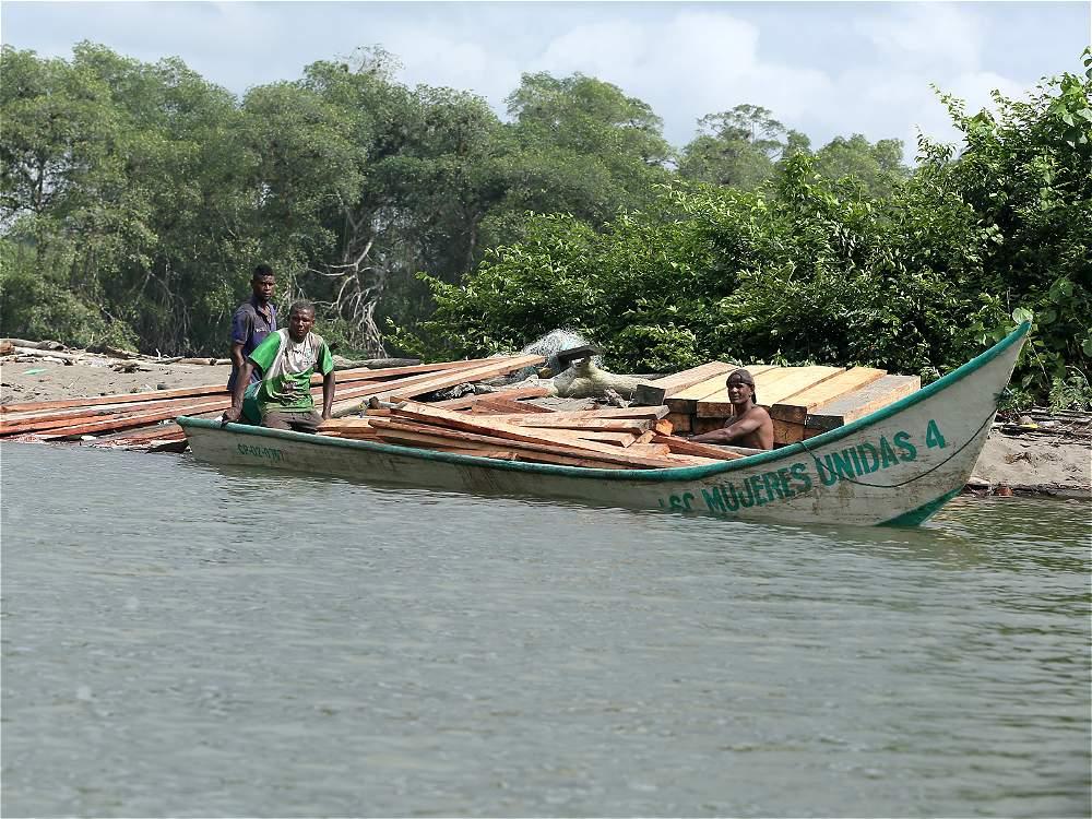 El tráfico de madera es crítico en el sur de Nariño, uno de los 8 focos de deforestación del país.