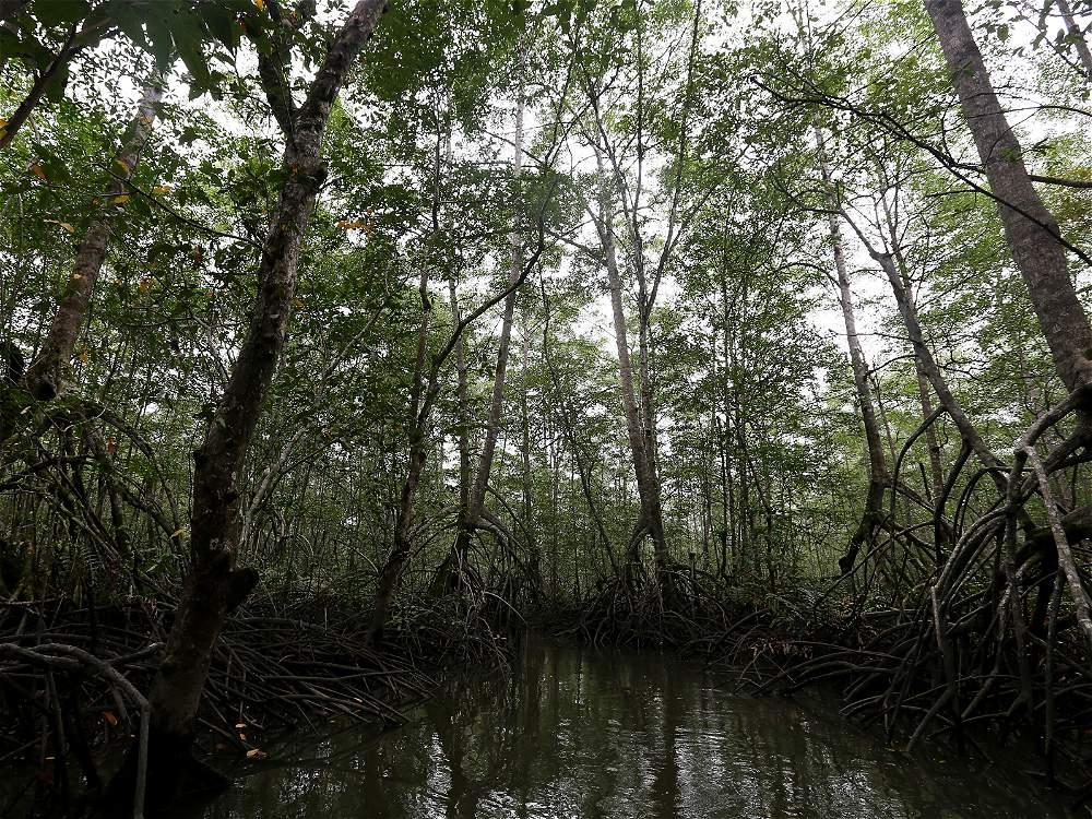 En Bajo Mira - Frontera y Acapa hay más de 24.000 hectáreas de bosque de manglar.