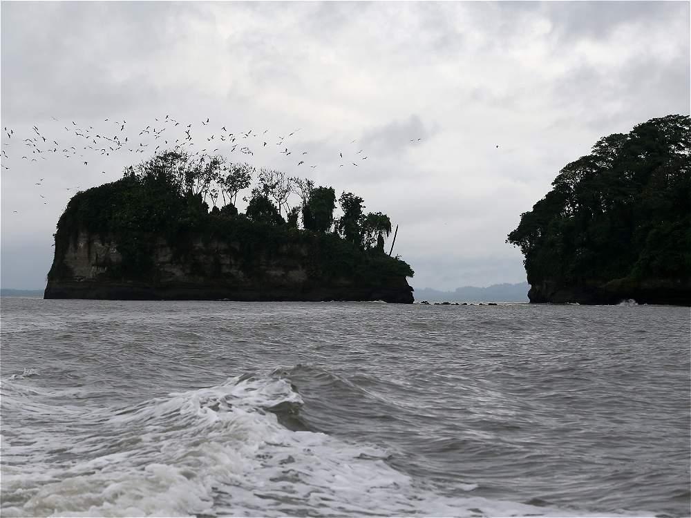 En el Pacífico colombiano habitan más de 6.500 especies de fauna y flora.