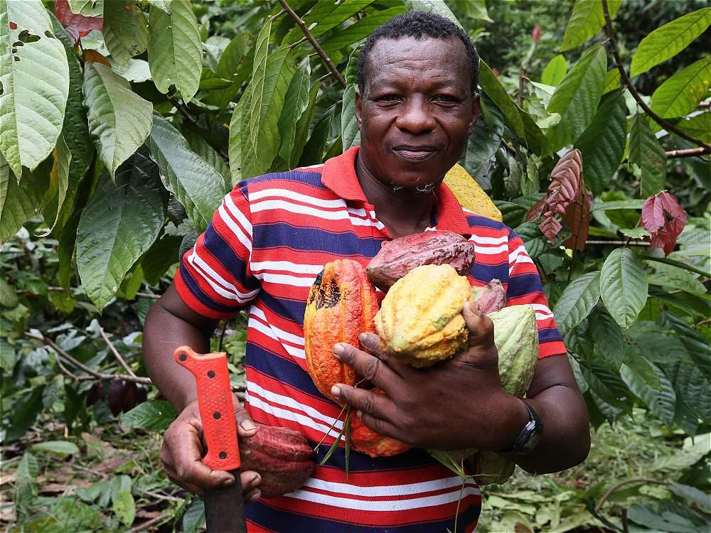 El cultivo de cacao y coco son  dos alternativas económicas para no trabajar con la tala de madera.
