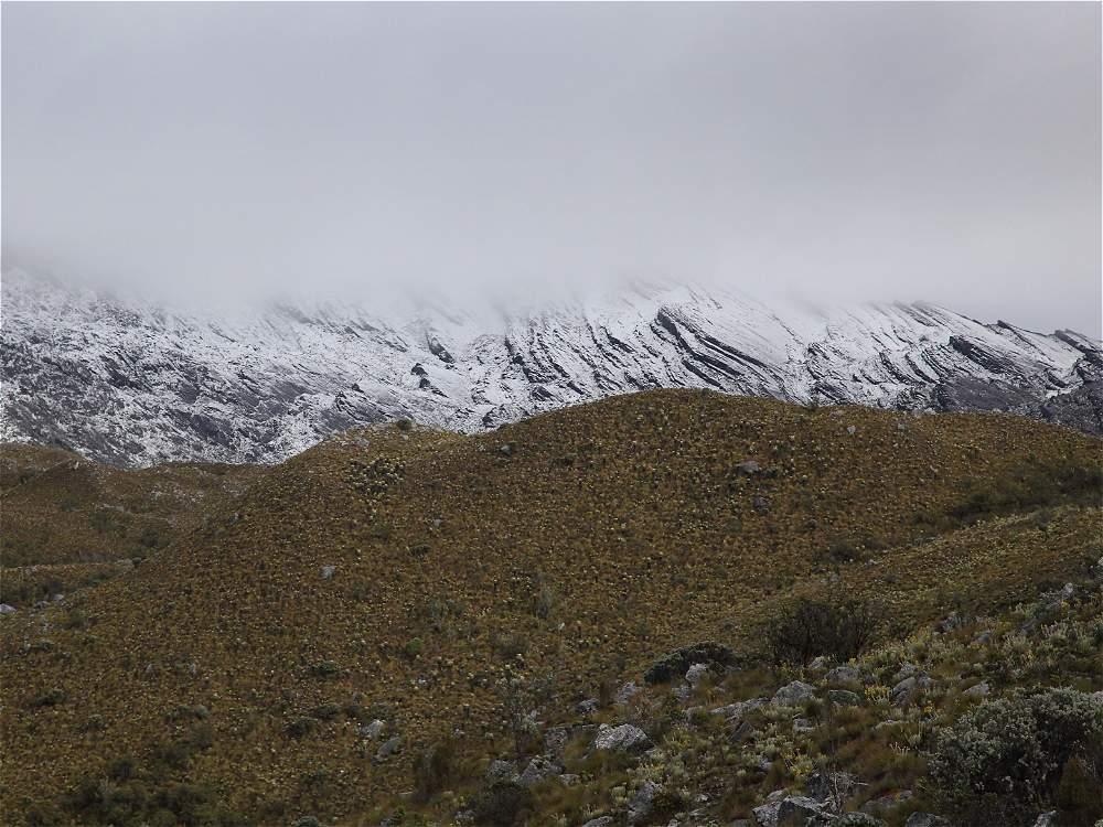 El blanco de la nieve contrasta con la verde vegetación paramuna.