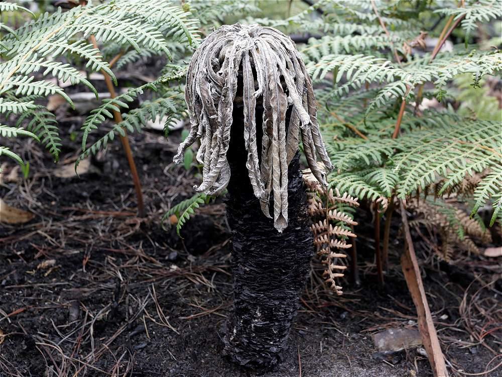 La vegetación de los cerros sufre las consecuencias de los implacables incendios.