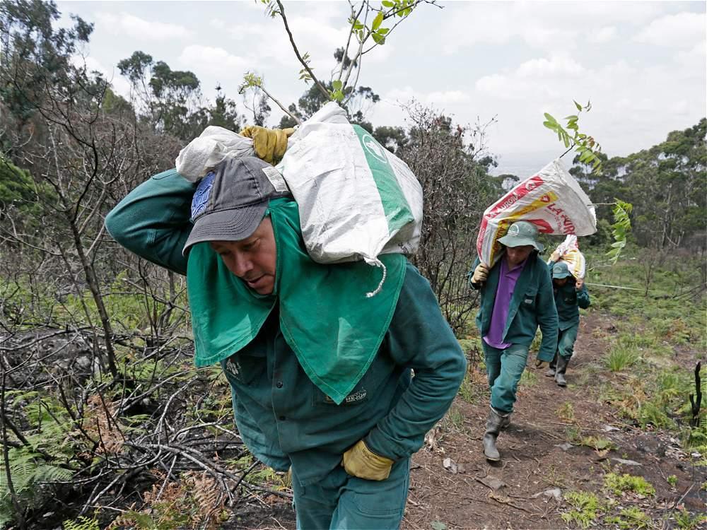 El Jardín Botánico tiene proyectos de reforestación de zonas afectadas por incendios.
