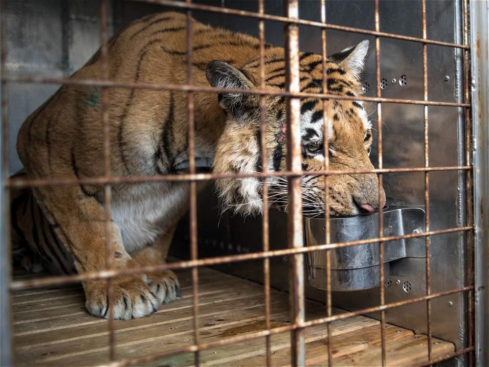 Peor zoológico del mundo