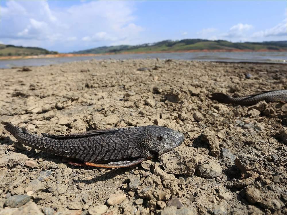 Las impactantes imágenes que deja la sequía del Lago Calima
