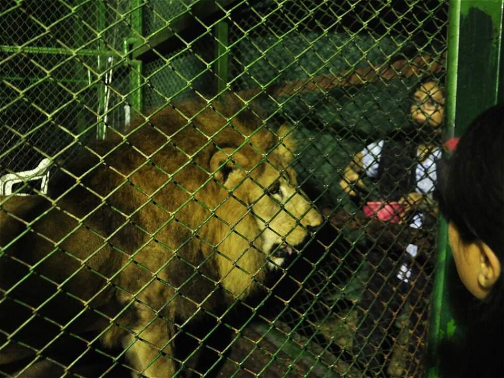leones africa