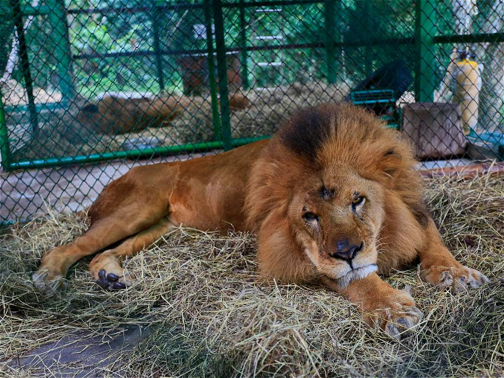 leones colombia