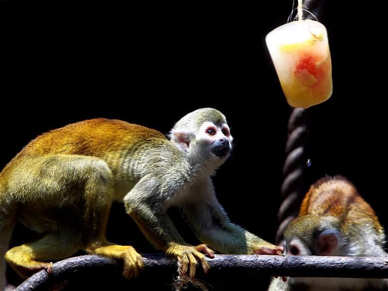 Zoológico Santa Fe de Medellín refresca a sus animales con una curiosa estrategia